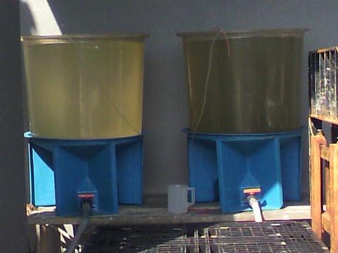 fccfbea3779 大野漁協 安芸の一粒 ブランド牡蠣 - 牡蠣の餌